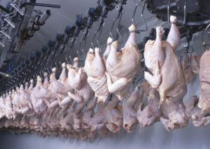 carne polli