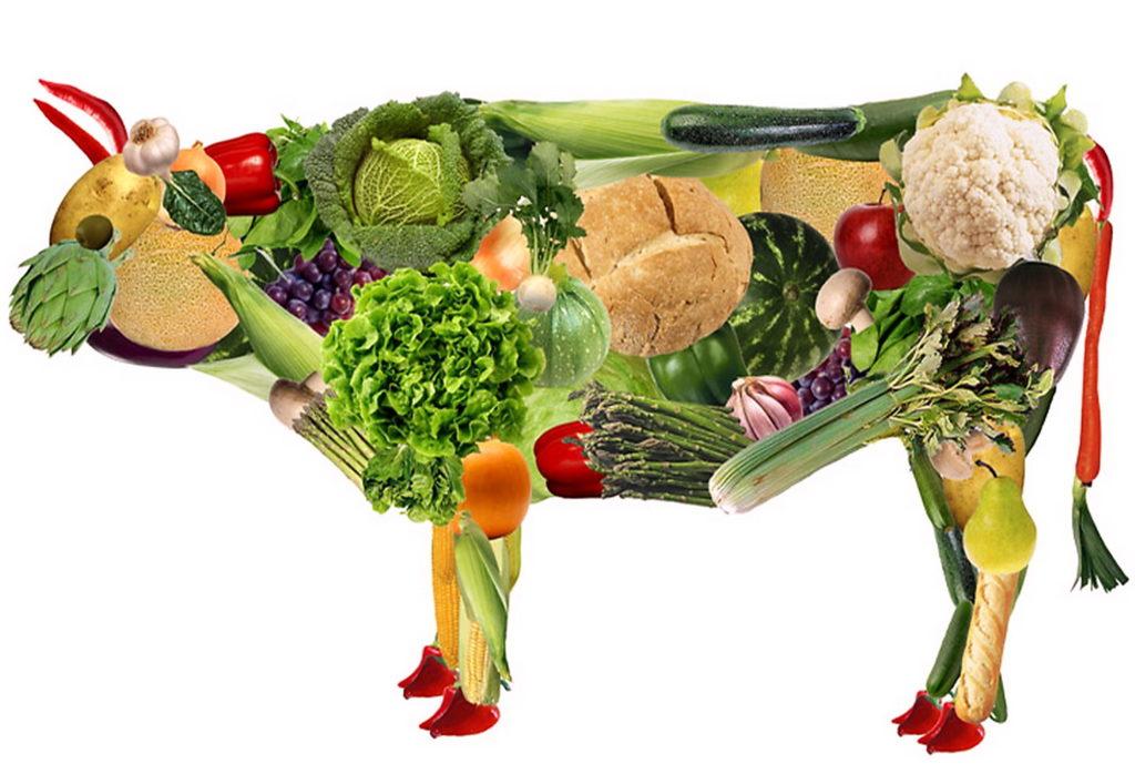 No alla carne: per moda, per amore, per la salute