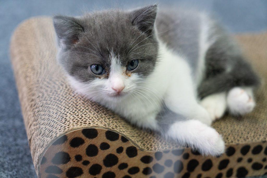 Il gatto Artiglio, fantastico amico di una vita difficile